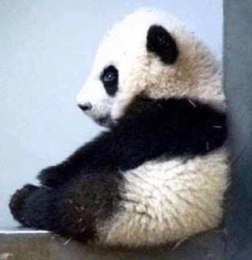 小熊猫解盘