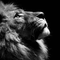 老狮解盘的个人主页
