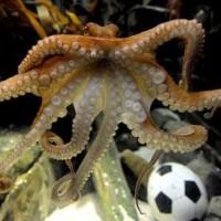 章鱼猜球的个人主页