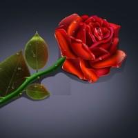 带刺玫瑰的个人主页