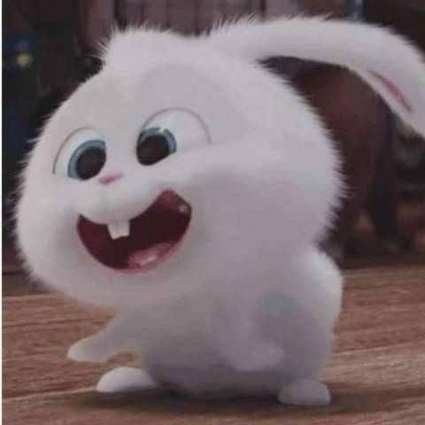 兔大爷推球